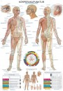 Uzskates materiāls - Akupunktūra
