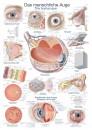 Uzskates materiāls - Cilvēka acs
