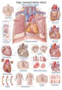 Uzskates materiāls - Cilvēka sirds